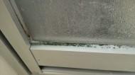 浴室の扉のパッキンにカビがびっしりついています。